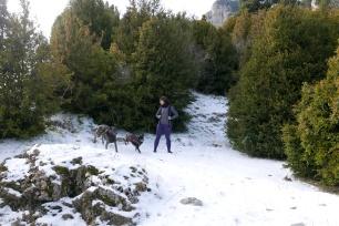 perros pasándoselo bien nieve abrigos