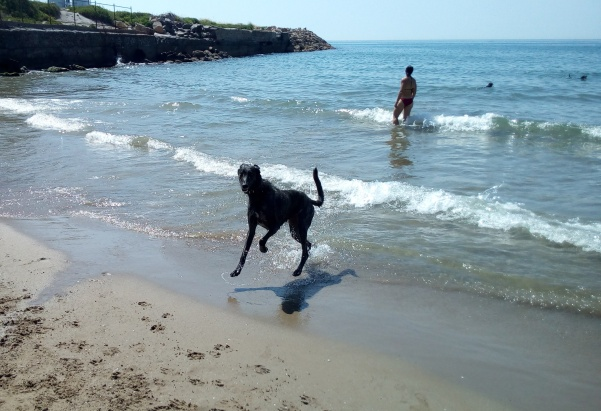 Cala Vallcarca Sitges perros